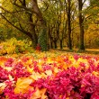 Colors of Autumn — Stock Photo #7399854