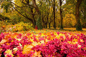 Colors of Autumn — Stock Photo