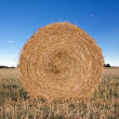Bale in a harvested field — Stock Photo