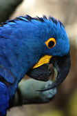 Surprised Macaw — Stock Photo