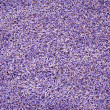 Lavander seeds background — Stockfoto #7717626