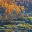 Autumn landscape — Stockfoto #7383239