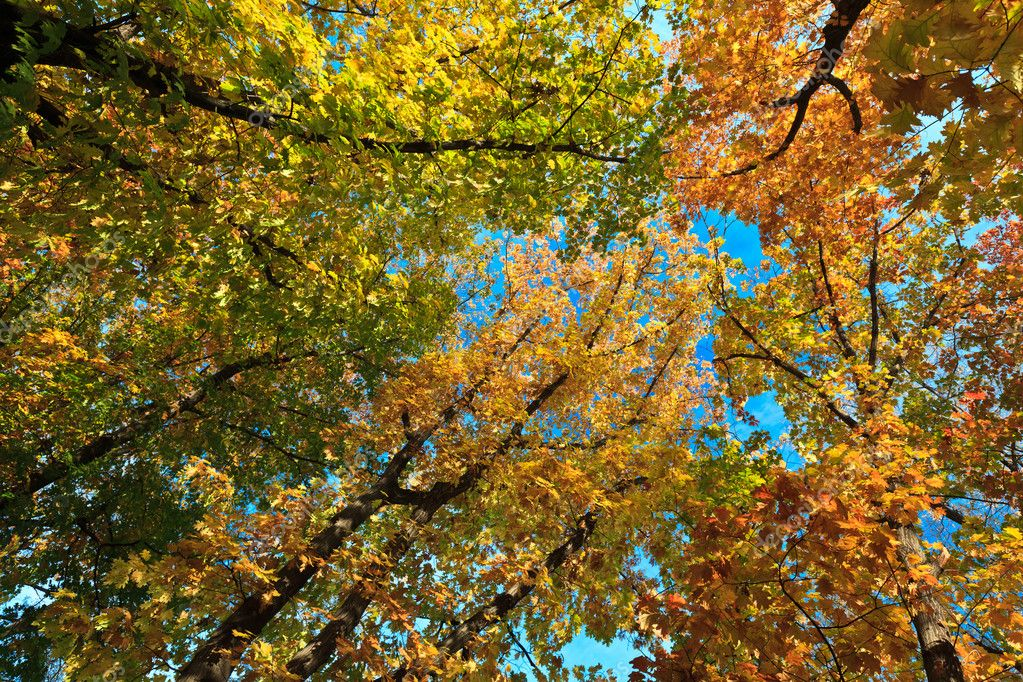 Projection on the sky of autumn trees — Stock Photo #7383215