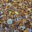 Autumn leaves — Stockfoto #7454894