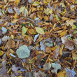 Autumn leaves — Stock Photo #7454894