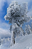 Snow tree — Stockfoto