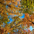 Autumn trees — Stock Photo #7505482