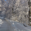 Rustic road in winter — Stock Photo