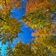 Autumn trees — Stock Photo #7549935