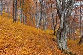 Autumn forest — Photo