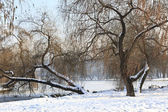 Trees in winter — Stockfoto
