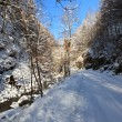 Stock Photo: Rustic road in winter