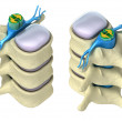 Human spine in details: Vertebra, bone marrow, disc and nerves. Isolated on — Stock Photo