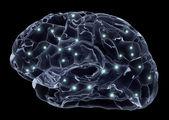 Insan beyni ve sinir hücreleri — Stok fotoğraf