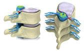 Columna vertebral humana en detalles — Foto de Stock