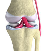 Knee joint closeup view. Isolated on white — Stock Photo