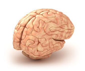 Human brain 3D model, isolated — Stock Photo