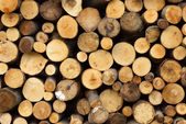 Pile of wood logs ready for winter — Stock Photo