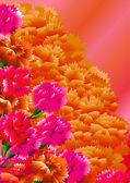 Цветы гвоздики — Stock Vector