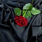 Rose blume stoff seide falten tuch beerdigung sylvester liebe — Stock Photo