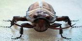 Kakerlak — Stock Photo