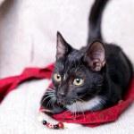 Black kitten — Stock Photo #7388301