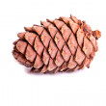 Pine cone — Stock Photo #7462634