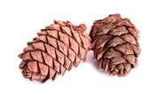 Two pine cones — Stock Photo