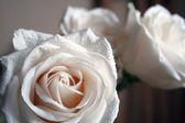 Tea roses — Stock Photo
