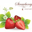 Постер, плакат: Strawberries vector illustration of a realistic