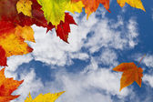 Autumn Leaves Against Sky. — Stock Photo