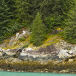 Forest along Rocky Shore — Stockfoto #7305849