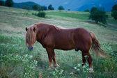 El caballo — Foto de Stock