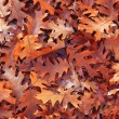 Foglie in Autunno - Stock Photo