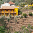 Yellow farm house on a hill surrounded by trees — Stock Photo
