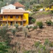 Yellow farm house on a hill surrounded by trees — Stock Photo #7305614