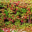 Stock Photo: Window autumn clambering plant