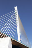 Queen Elisabeth bridge — Stock Photo