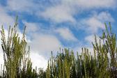 Little Pine Plants Pattern — Stock Photo