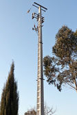 Medium Voltage Pole between some trees, under blue sky — Stock Photo