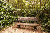 Empty old wooden bench against foliage and trees — Stock Photo