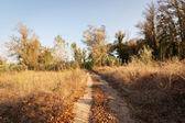 Sonbahar ormanda yolunu — Stok fotoğraf