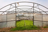 No roof Greenhouse — Stock Photo