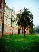 Palm tree at a monastery — Stock Photo