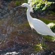 Wetlands Wildlife — Stock Photo