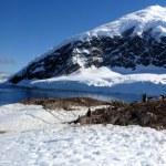 Antarctica — Stock Photo