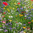 Flower meadow — Stock Photo