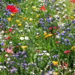 Flower meadow — Stock Photo #7496543