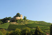 Castle and vineyard — Stock Photo