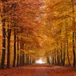Sand lane with trees in autumn — Stock Photo #7309384